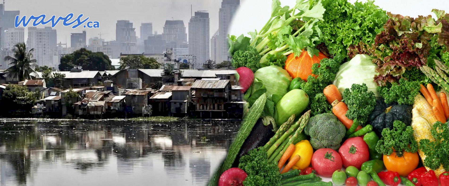 pbci-metromanila-veggies